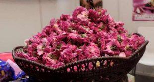 إنتاج الورد الطري بالمغرب في ارتفاع
